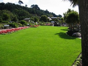 Lawn Treatment And Lawn Cultivation