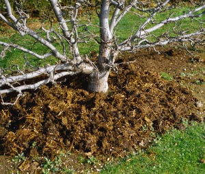 Fertilizers For Fruit Trees