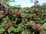 Fruit Wine Recipes – Hedgerow And Garden Fruits