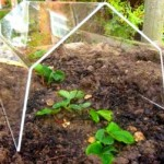 Greenhouse Frames and Cloches