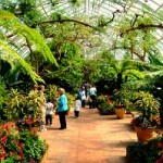 Greenhouse Gardening Advantages