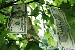 Greenhouse Prices - Purchase And Running Costs