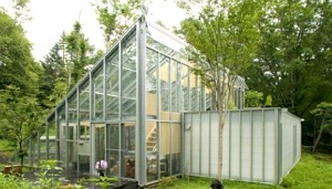 Greenhouse Types And The Plants You Can Grow