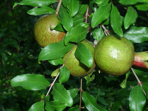 Growing Fruit – How To Stock And Maintain A Fruit Garden