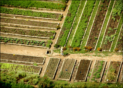 How To Become Self Sufficient With A Small Plot