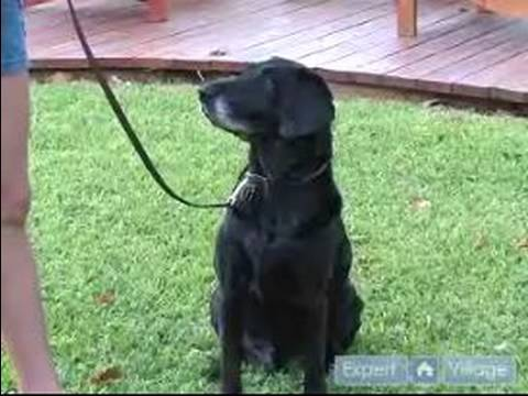 Conveying Commands To A Dog