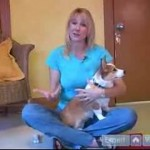 Preventing Bad Habits In Puppies And Dogs