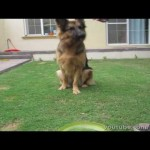 Teaching a Dog to Sit and Stay