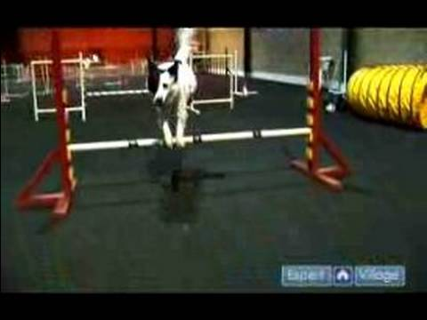 Dog Training – Agility and Jumping