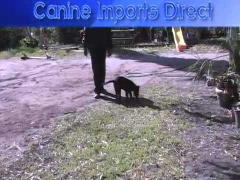 Dog Obedience – Search