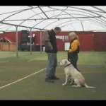 Dog Obedience Training – Manwork