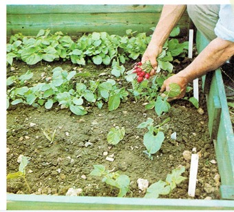Growing Vegetables In Frames