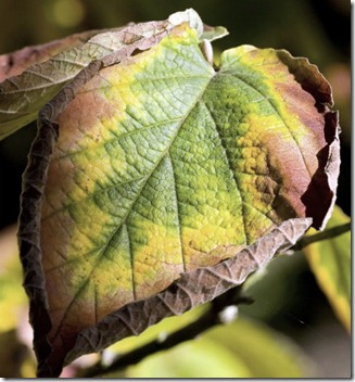 Fruit Pests And Diseases