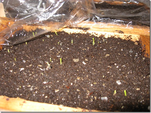 Tips For Growing Vegetables And Salads From Seed