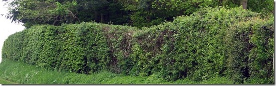 Growing And Maintaining Hedges