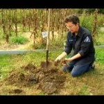Kitchen Garden–Setting Up And Maintaining For Self Sufficiency