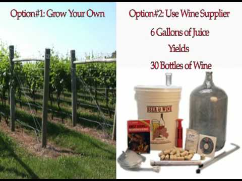 Home Wine Making Basics