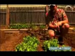 Growing Green Salad Vegetables