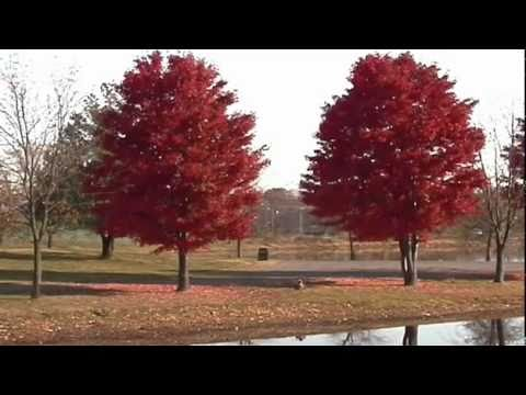 Cultivating Trees, Shrubs, And Climbers (Hardy)