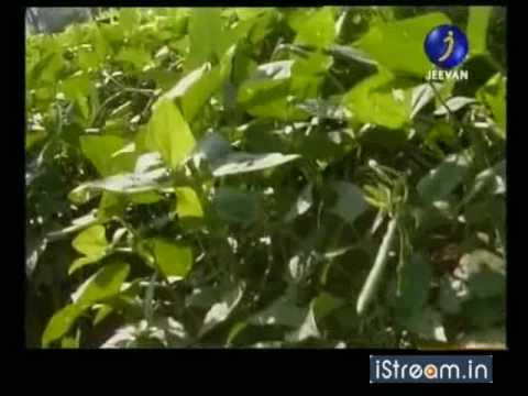 Common Plant Pests And Diseases
