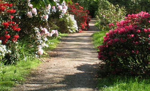 Building garden paths for beginners Types of pathways in landscaping