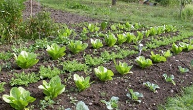 Planning To Grow Vegetables And Fruits
