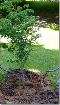 Planting and Maintaining Trees