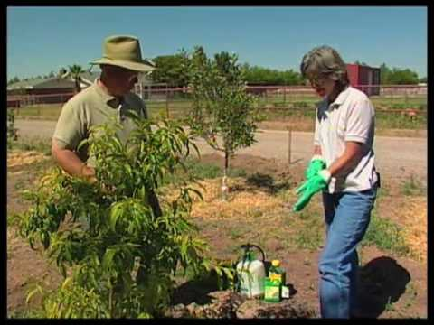 How To Spray Fruit Trees