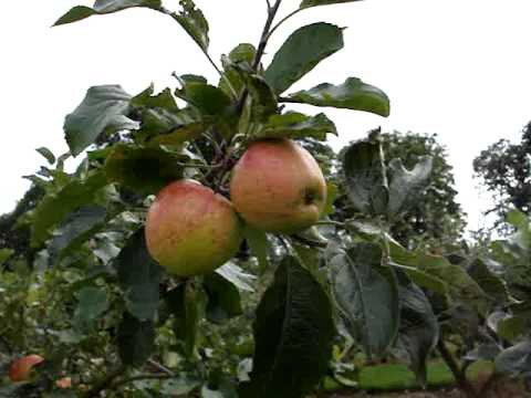 Correct Time for Picking Fruit
