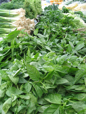 How to Cultivate Herbs