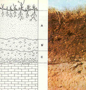 Example soil horizons. a) top soil and colluvi...