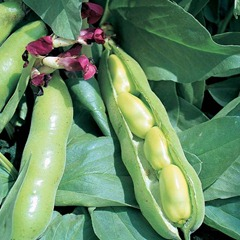 Easy Methods For Growing Beans