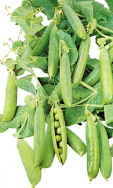 Best Methods For Growing Peas