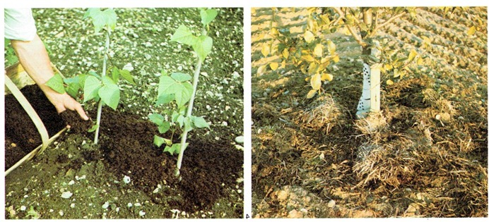 Soil Improvement–Mulching, Manuring, Composting And Fertilising